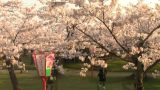 鶴ヶ岡城址鶴岡公園、護国神社前の桜ライブカメラと雨雲レーダー/山形県鶴岡市
