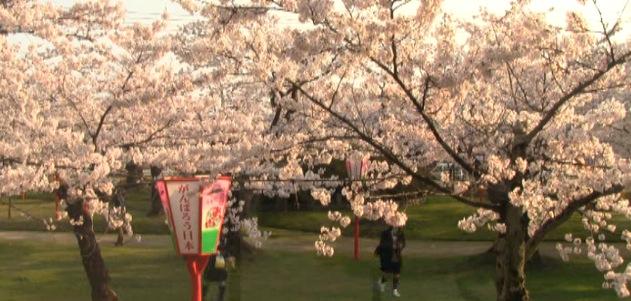 鶴ヶ岡城址鶴岡公園、護国神社前の桜ライブカメラ