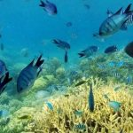 ヌメア イロカナールのサンゴ礁360度パノラマカメラ