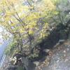 乳頭温泉郷 「大釜温泉」周辺ライブカメラ