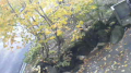 乳頭温泉郷 「大釜温泉」周辺ライブカメラと雨雲レーダー/秋田県仙北市