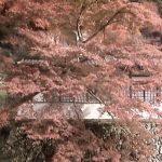 瀧安寺鳳凰閣ライブカメラ