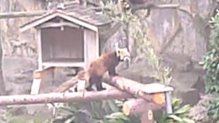 野毛山動物園のレッサーパンダライブカメラと雨雲レーダー/神奈川県横浜市