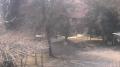 """""""よこはま動物園ズーラシア""""の動物ライブカメラと雨雲レーダー/神奈川県横浜市"""