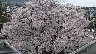 飯田城址ライブカメラと雨雲レーダー/長野県飯田市