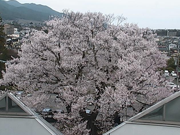 飯田城址ライブカメラ