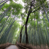 嵐山 竹林の360度パノラマカメラ