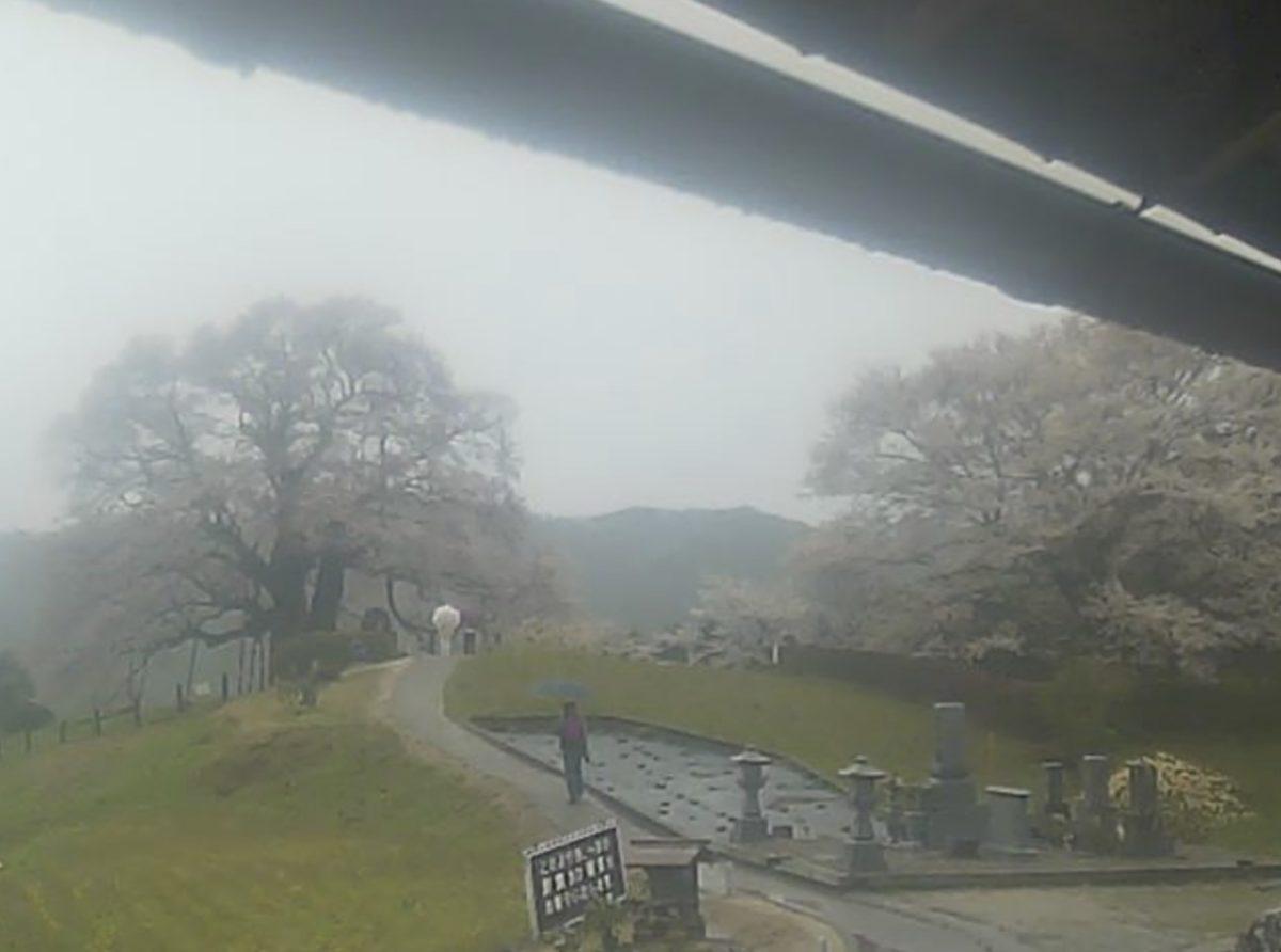 醍醐桜ライブカメラと雨雲レーダー/岡山県真庭市