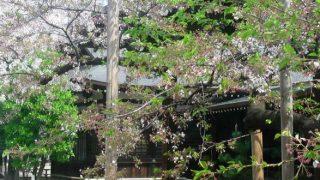 停止中:靖国神社の桜ライブカメラと雨雲レーダー/東京都千代田区