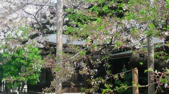 靖国神社の桜ライブカメラ