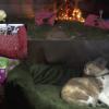 ネコ好きにおすすめ!一匹のおかーさん猫と3匹の子猫ライブカメラ「ぬくのこ」