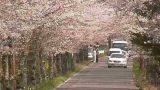 栃木県栃木市 太平山遊覧道路の桜ライブカメラと雨雲レーダー