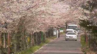 太平山遊覧道路の桜ライブカメラと雨雲レーダー/栃木県栃木市