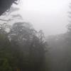 屋久島の森ライブカメラ