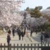 姫路城大入実況ライブカメラ