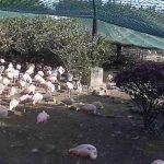 フェニックス自然動物園のフラミンゴ村ライブカメラ