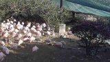 フェニックス自然動物園のフラミンゴ村ライブカメラと雨雲レーダー/宮崎県宮崎市