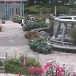 水生植物公園みずの森ライブカメラ(3ヶ所)