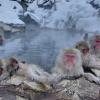 温泉につかる猿に癒される地獄谷野猿公苑のストリートビュー