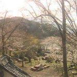 臥竜公園の桜ライブカメラ