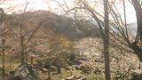 臥竜公園の桜ライブカメラと雨雲レーダー/長野県須坂市