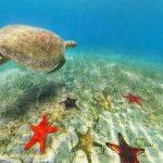 シュノーケリングをしたくなるニューカレドニアの海亀やヒトデが幻想的な360度パノラマカメラ