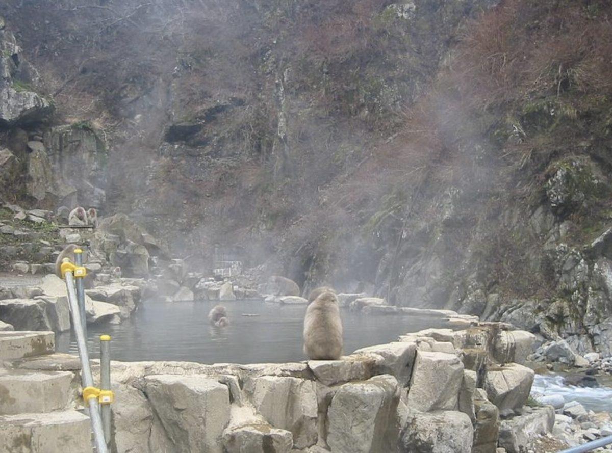 地獄谷野猿公苑 ライブカメラと雨雲レーダー/長野県山ノ内町