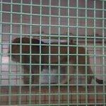 茶臼山動物園 ライオン・トラがみれるライブカメラ