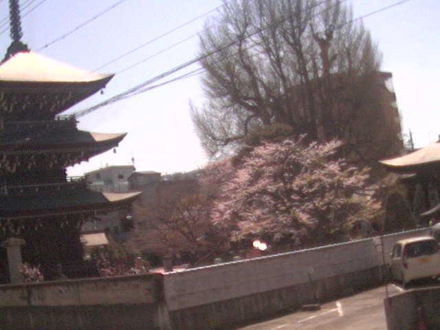 飛騨国分寺ライブカメラ