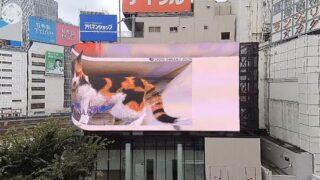 3D巨大猫・クロス新宿ビジョン ライブカメラと雨雲レーダー/東京都新宿区