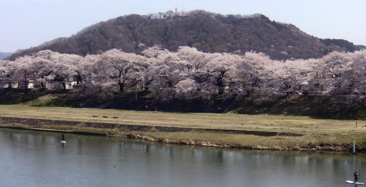 一目千本桜・白石川 ライブカメラと雨雲レーダー/宮城県大河原町