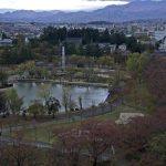 桜の開花時期限定:開成山公園ライブカメラ