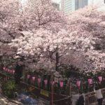 目黒川桜橋の桜ライブカメラ