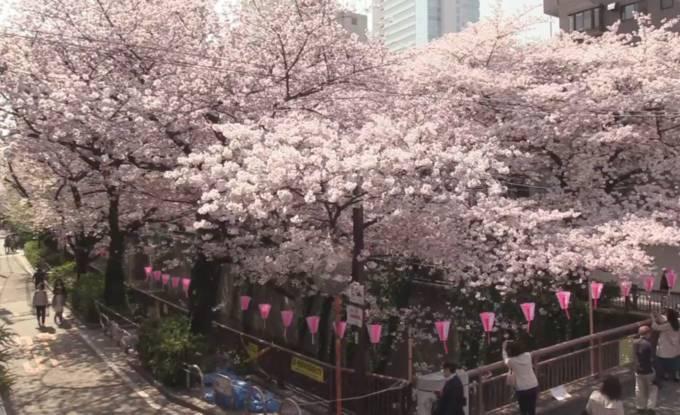 目黒川桜橋の桜ライブカメラと雨雲レーダー/東京都目黒区