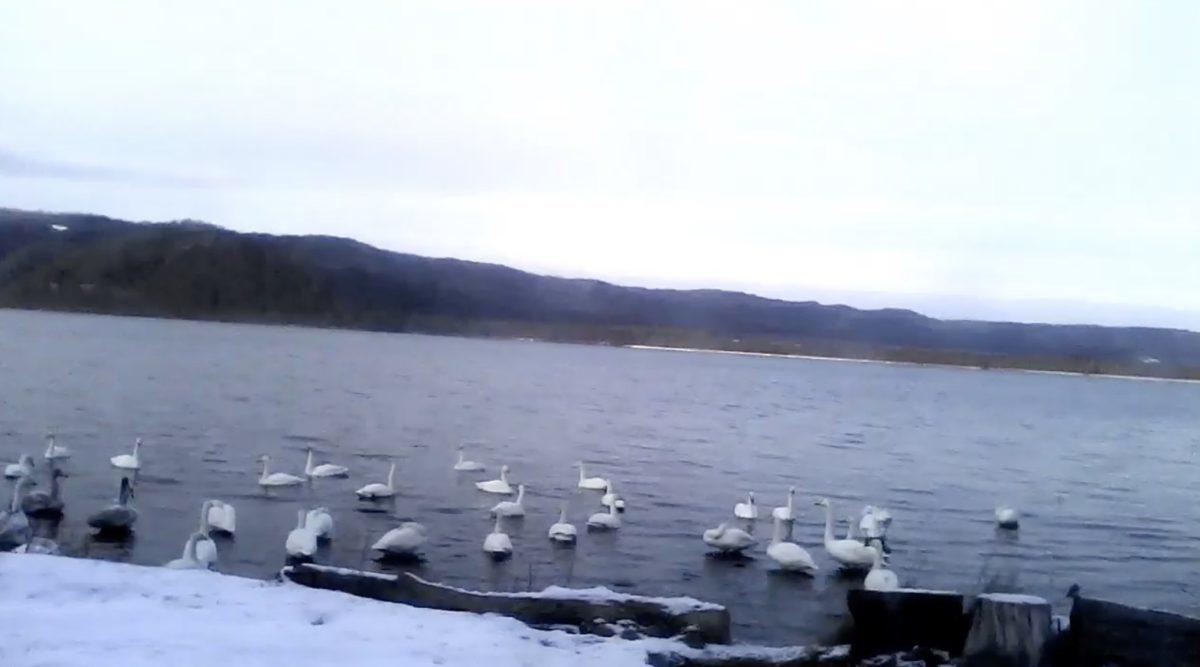 屈斜路湖 ライブカメラ(屈斜路湖ホテル)と雨雲レーダー/北海道弟子屈町