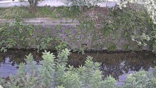 小熊野川・小熊野橋ライブカメラと雨雲レーダー/福岡県北九州市小倉北区