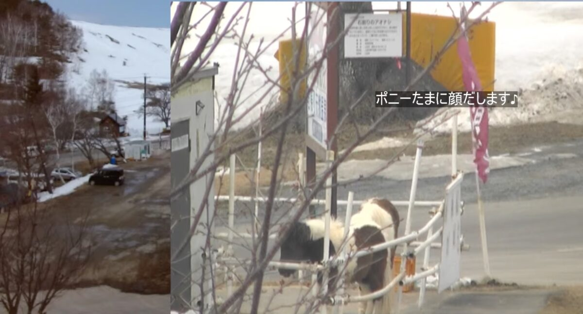 菅平高原スキー場 ポニーの様子 ライブカメラと雨雲レーダー/長野県上田市