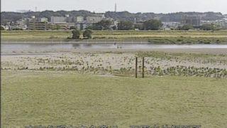 多摩川 ライブカメラ(石原水位観測所)・河川水位と雨雲レーダー/東京都調布市