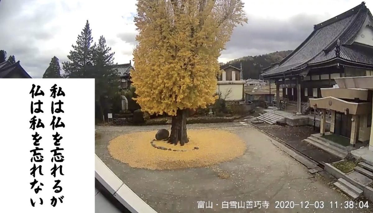 白雪山善巧寺 ライブカメラと雨雲レーダー/富山県黒部市