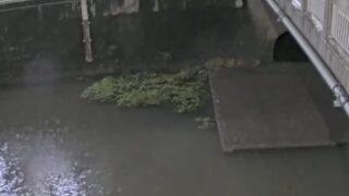 善福寺川・荻窪公園付近ライブカメラと雨雲レーダー/東京都杉並区荻窪