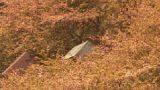 酒匂川などが見える松田山ハーブガーデンライブカメラと雨雲レーダー/神奈川県松田町
