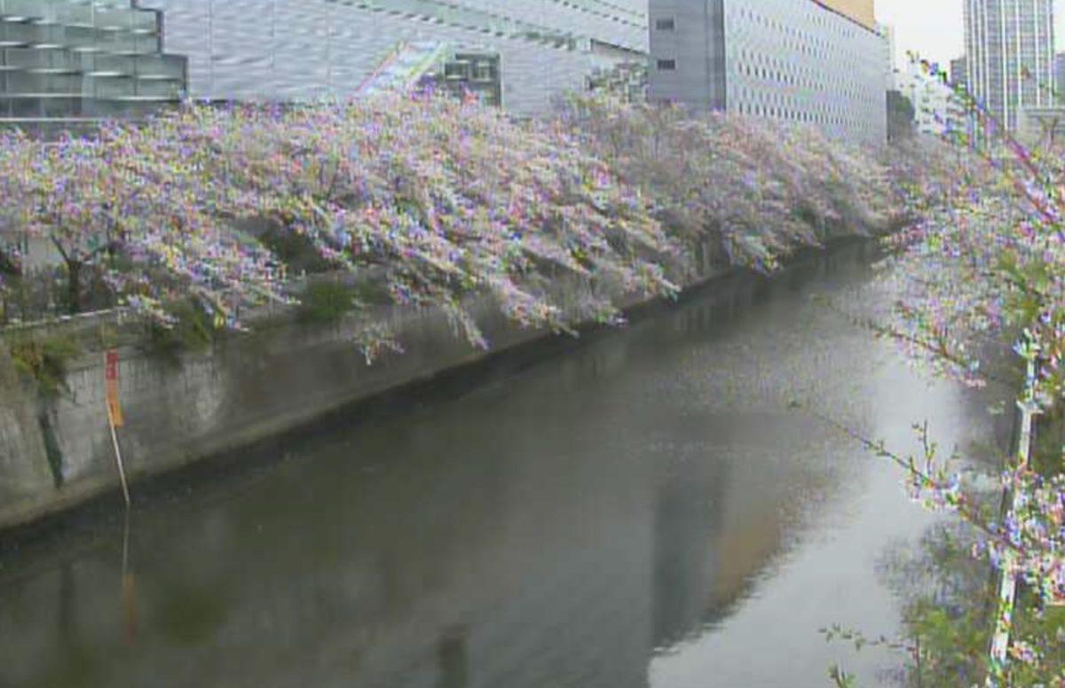 目黒川 ライブカメラ(区境 太鼓橋下流)と雨雲レーダー/東京都目黒区