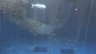 名古屋港水族館 ライブカメラと雨雲レーダー/愛知県名古屋市
