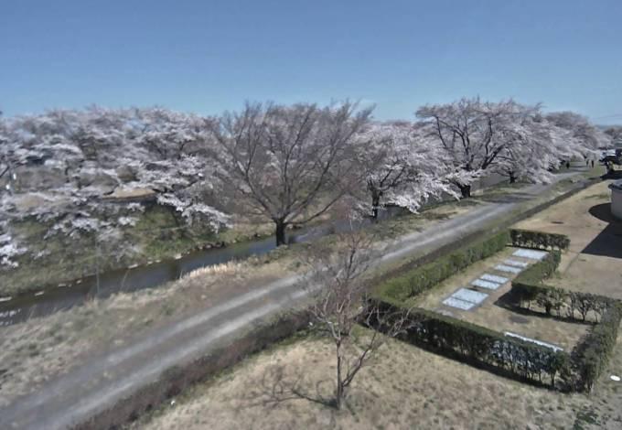 桜の開花時期限定:藤田川ふれあい桜ライブカメラと雨雲レーダー/福島県郡山市