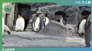 旭山動物園 ぺんぎん館 ライブカメラと雨雲レーダー/北海道旭川市