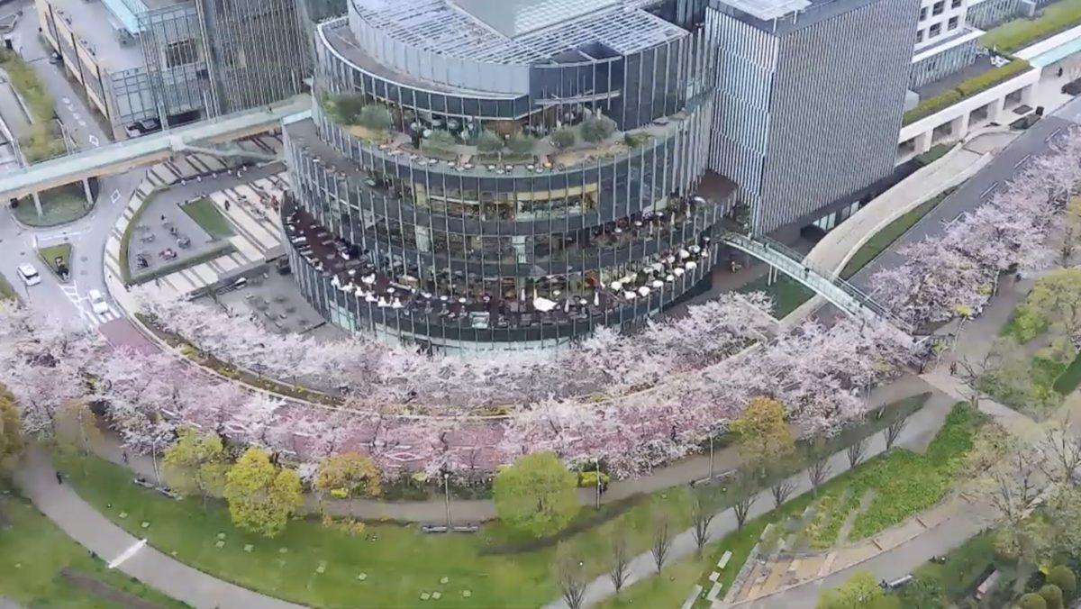 六本木 東京ミッドタウン 桜並木・檜町公園 ライブカメラと気象レーダー/東京都港区