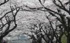 桜が見えるカメラ