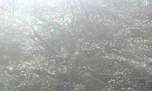 停止中:丸山公園ライブカメラと雨雲レーダー/愛媛県宇和島市