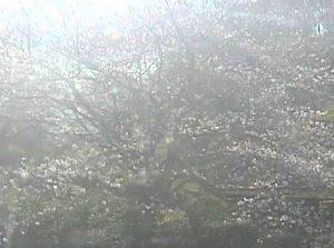 愛媛県(宇和島市):丸山公園のWebカメラ