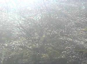 丸山公園ライブカメラ